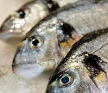 Mangez du poisson deux fois par semaine, mais pas plus