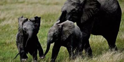 Des éléphants en excursion en Chine