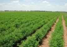 L'agriculture creuse les sillons de la croissance