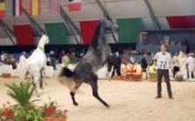 Le 6ème Salon du Cheval d'El Jadida