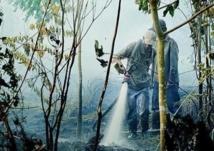 En Indonésie, la forêt vierge part en fumée