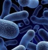 Des chercheurs percent les mystères de micro-organismes méconnus
