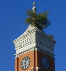 Insolite : Un arbre sur le toit du Palais de justice