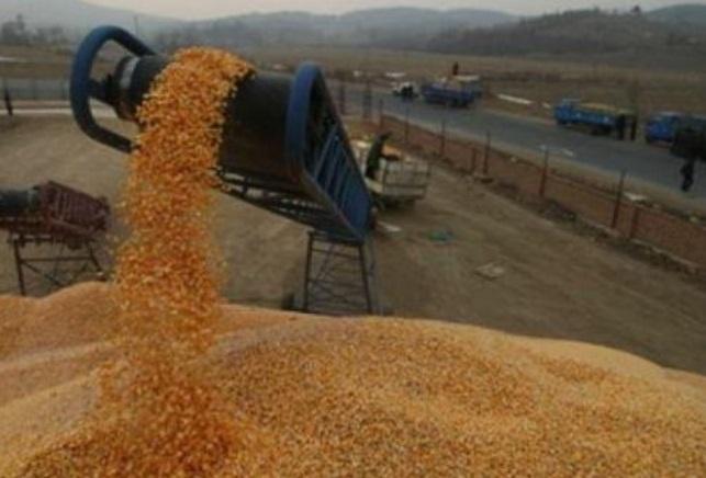 La céréaliculture, parent pauvre du secteur agricole