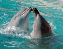 Les dauphins communiquent entre eux en s'appelant par leur nom
