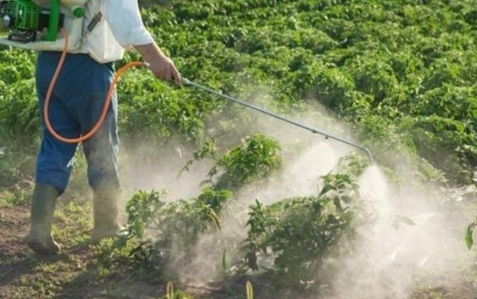 La FAO met en garde contre les dangers des pesticides