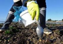 Levée de l'interdiction de la récolte des coquillages