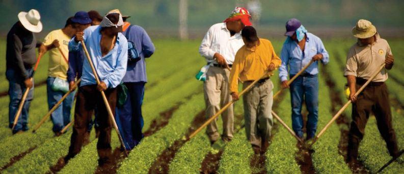 Les travailleurs migrants internationaux représentent 4,9% de la main-d' œuvre mondiale