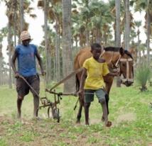 Les socles de la division en Côte d'Ivoire