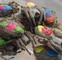 Les araignées ont toutes leur personnalité