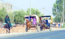 La charrette, reine de la route à Mohammedia