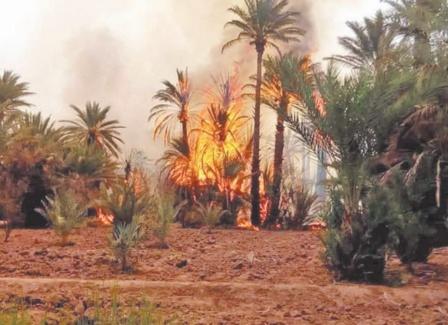 Des milliers de palmiers partent en fumée