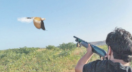 C' est parti pour la chasse de la tourterelle
