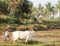 L'Inde et la reconnaissance des droits fonciers aux pauvres