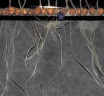 Des racines robotisées pour simuler la croissance des plantes