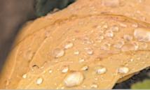 Héritage des pluies acides