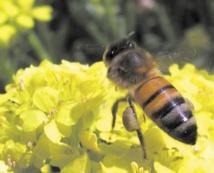 Les secrets du vol des insectes révélés par des scientifiques