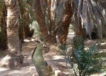 Festival de l'oasis du Guir à Boudnib