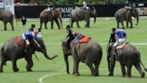 Insolite : Jouer au polo à dos d'éléphants