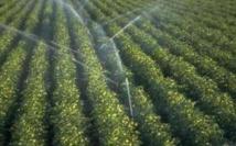 Fès-Boulemane : Une production record de près de 4 millions de quintaux de céréales