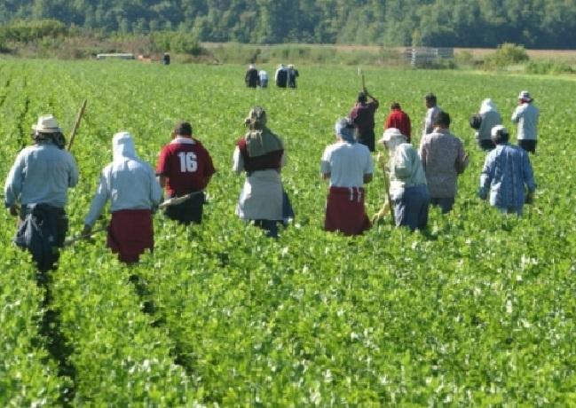 Le Maroc tancé par le Comité onusien pour les travailleurs migrants