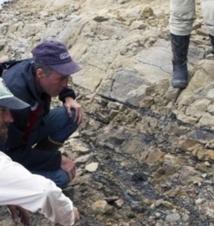 Des milliers d'empreintes de dinosaures retrouvées en Alaska