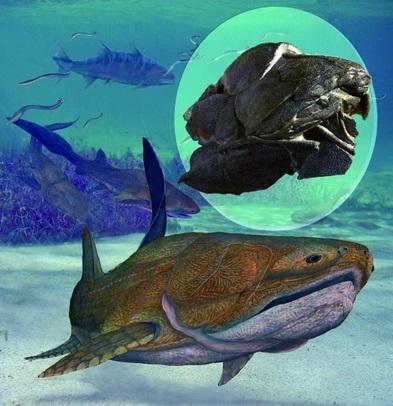 Un petit poisson remet en cause l'évolution des vertébrés