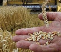 Amélioration des stocks de céréales