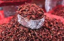 Une farine à base de sauterelles pour réduire la faim dans le monde ?