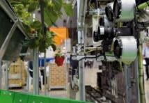 Un robot pour récolter les fraises bien mûres