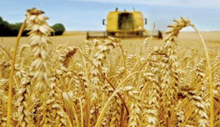 La production céréalière mondiale ne suffira pas à répondre aux besoins de consommation