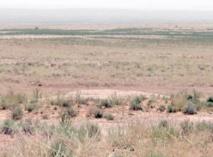 Conservation, réhabilitation de  l'aviafaune des zones arides au Maroc