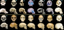 Le cerveau de l'Homme n'est pas si différent de celui des autres primates