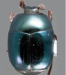 Découverte de 85 nouvelles espèces de coléoptères