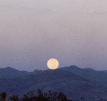 Le clair de Lune, un danger de plus pour les proies des prédateurs ?