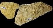 Le mosasaure, un impressionnant reptile cannibale avec un gros appétit