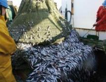 Flambée des prix du poisson