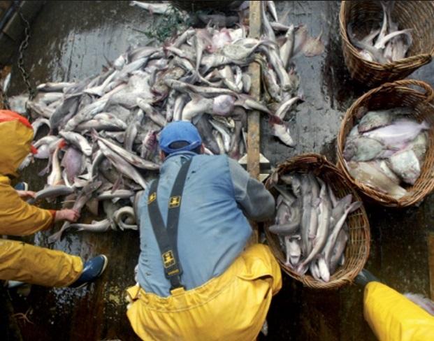 Des richesses halieutiques dilapidées au Sud du Maroc
