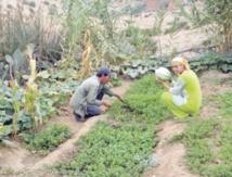 Coup d'envoi de l'Année internationale de l'agriculture familiale aux Nations unies
