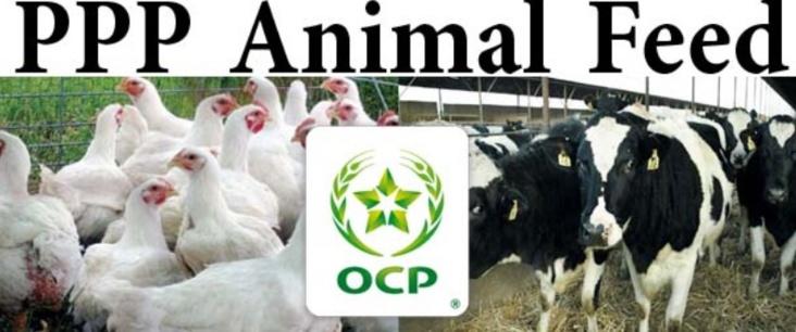 L'OCP dévoile un nouveau produit alimentaire