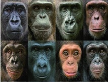 Pourquoi existe-t-il une aussi grande diversité de visages chez les primates ?