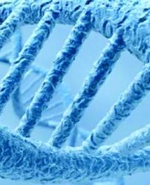 Un gène immunitaire légué par l'Homme de Néandertal