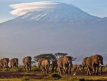 Les glaciers du Kilimandjaro auront-ils disparu en 2030?