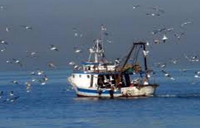 Le département de la Pêche provoque l'ire des sardiniers