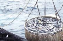 Conclusion de nouveaux protocoles de pêche