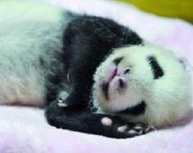 Pourquoi les animaux cartonnent sur Internet