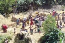 Repenser le développement rural  participatif et décentralisé au Cameroun
