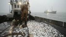 Les navires russes désormais autorisés à pêcher dans  les eaux nationales