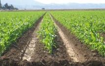 L'assurance demeure un élément important dans la gestion des risques agricoles