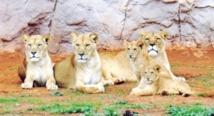 Visite guidée du Jardin  zoologique de Rabat
